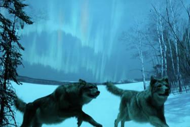 Wolves in the Night by mukademukwa