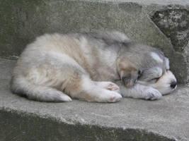 sleeping dog I by CapJohnny-II