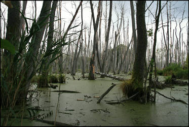 swamps of sadness