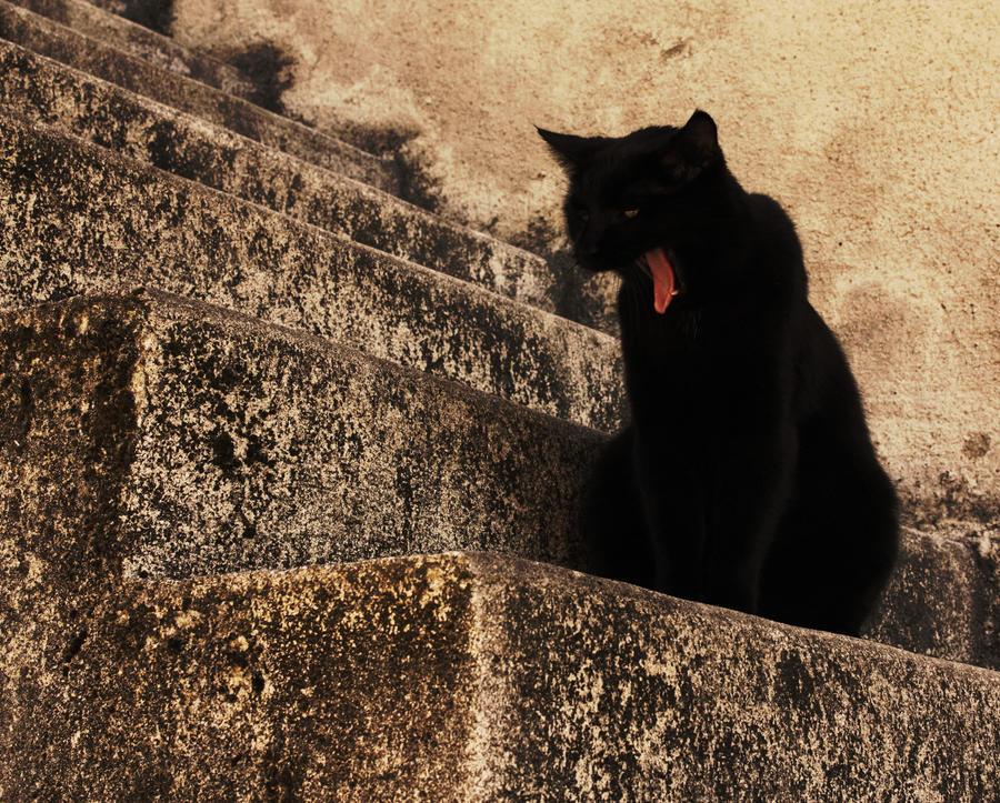 Contes du chat noir by DAWAT