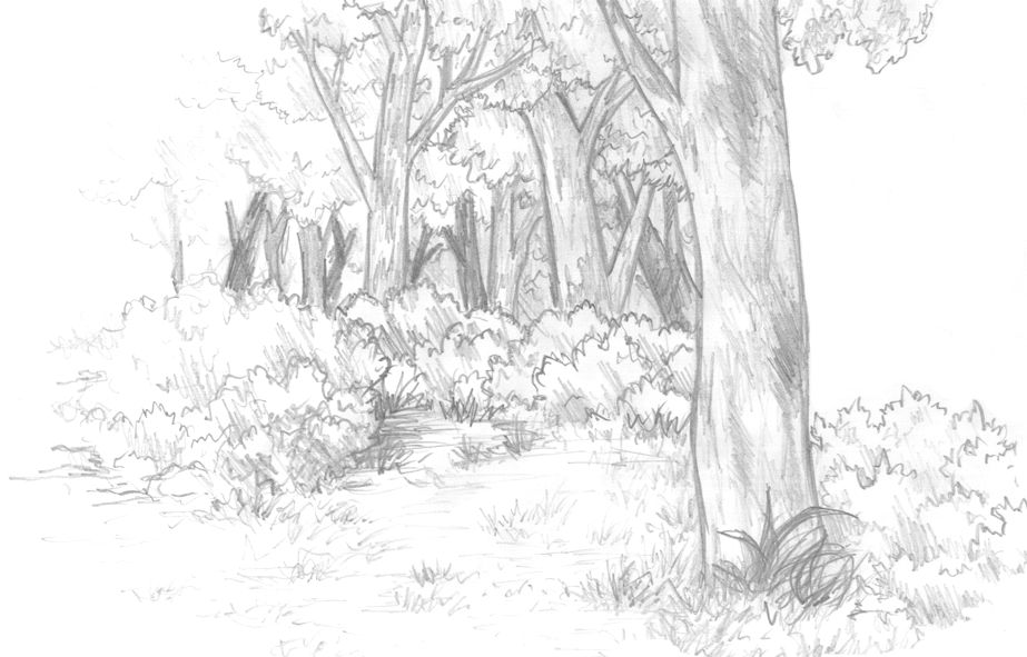 Forest Background by Kyle-Dove on DeviantArt