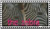 we love the zebra by trippinxtremezebra