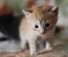 kitten by aviusst