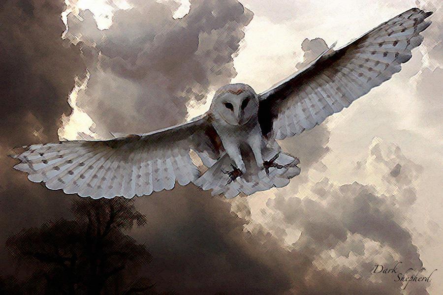 hunting owl by dark--shepherd
