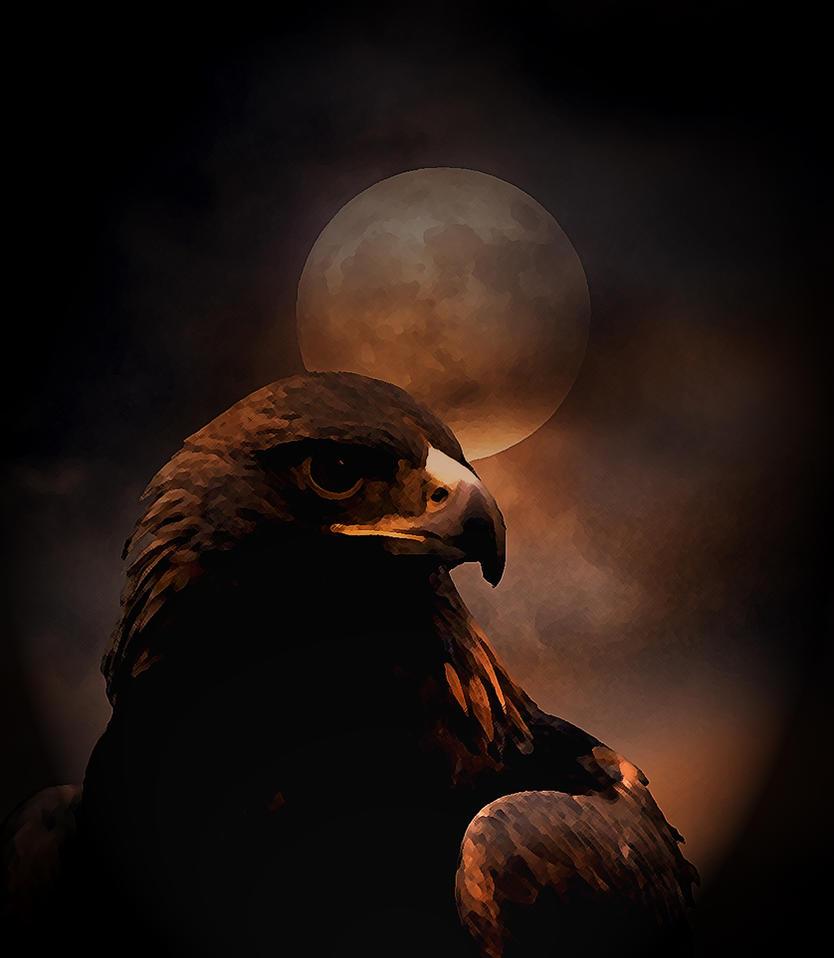 Black eagle by dark--shepherd