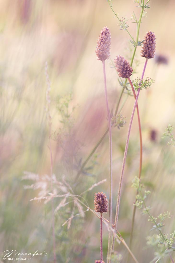 Meadow by Wiesenfee