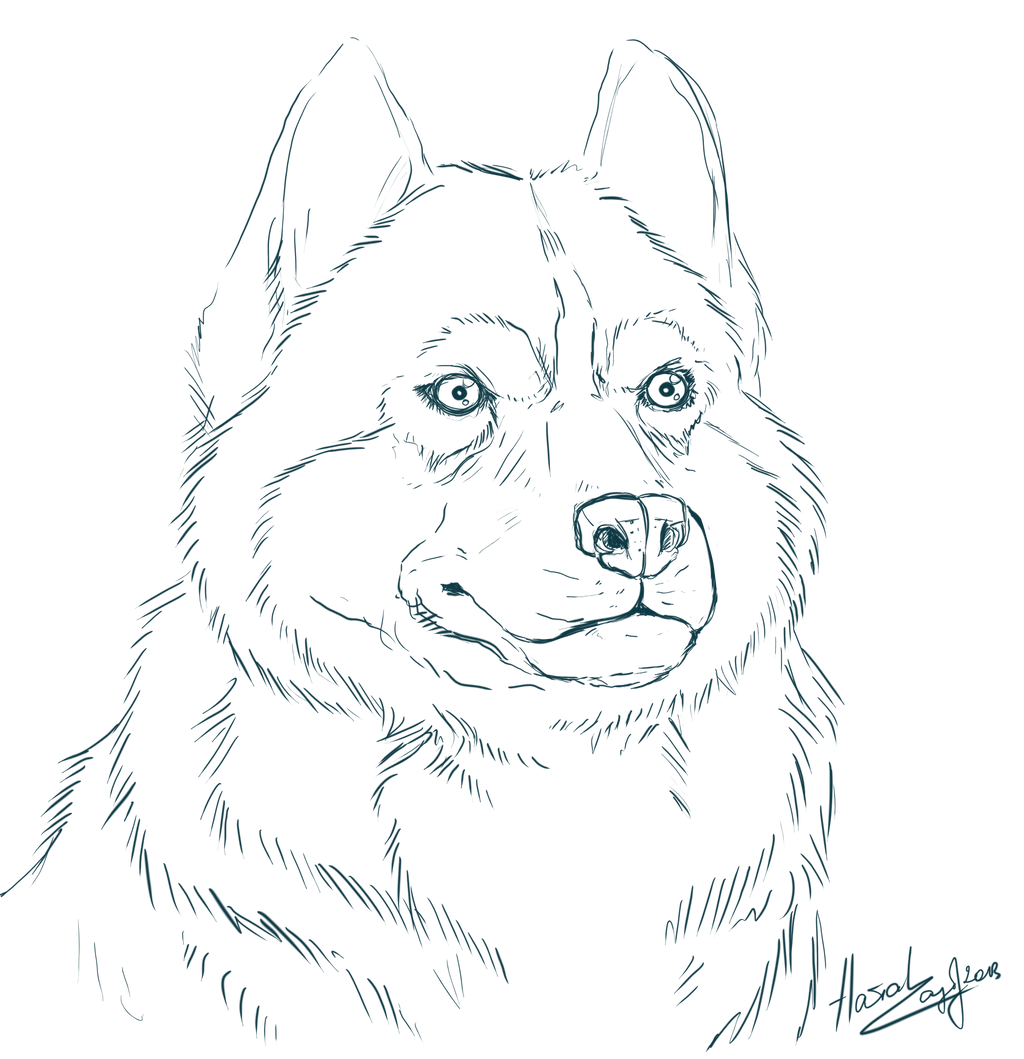 Alaskan Husky Coloring Pages Husky Coloring Pages