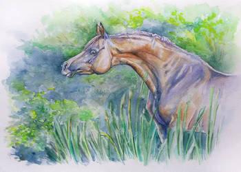 Arabian mare by Kantaka1
