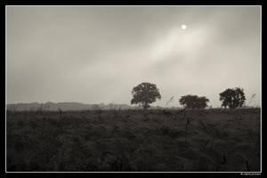 Un matin a Baye by dc58