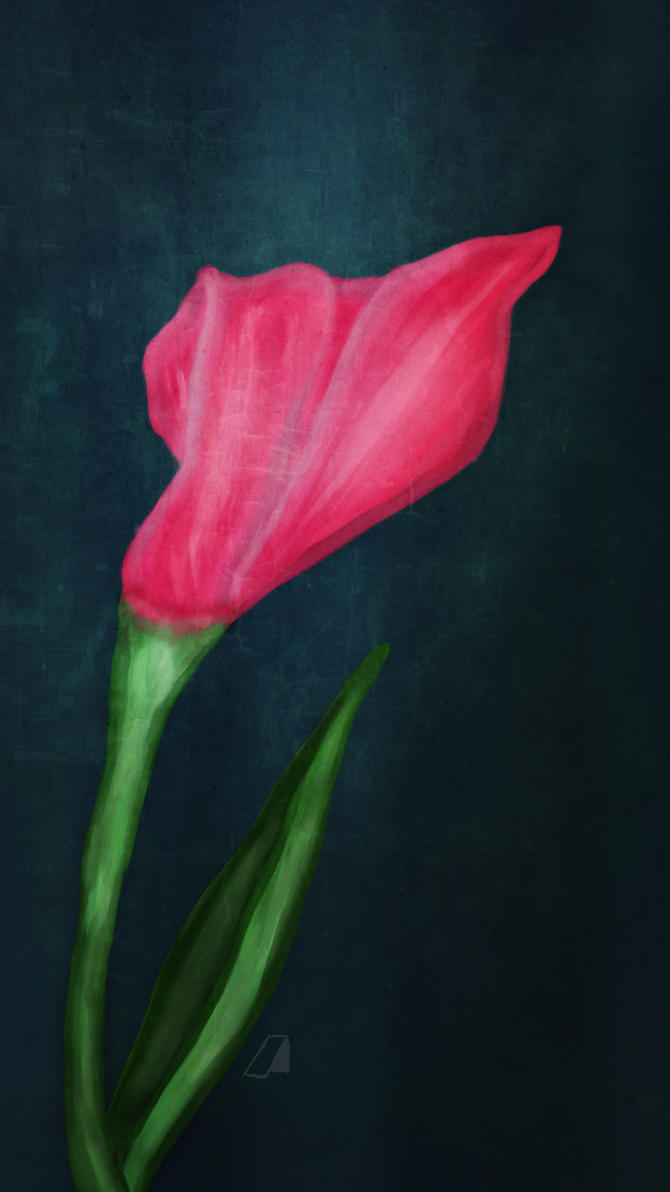 The Tulip of Syria by moslem-d
