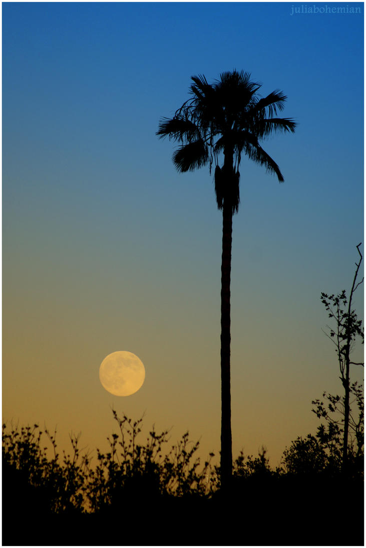 Moonrise in Black Star Canyon by Juliabohemian