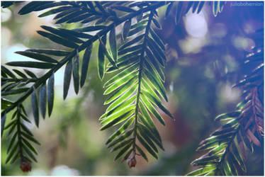 Redwood Bokeh by Juliabohemian