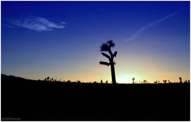 Lone Yucca