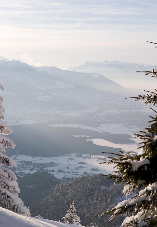 Photo - Austrian II by tigaer