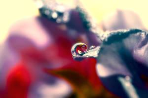 Captured Beauty - Liquidia