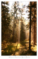 Photo - Where Faeries... by tigaer