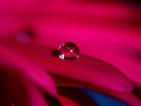 Photo - Captured Beauty_WP V