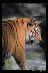 Photo - Le Tigre