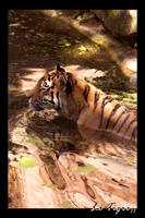 Photo - Le Tigre II