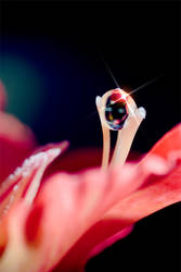 Photo - Captured Beauty XXvIII by tigaer