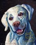 Max The Labrador by leiko