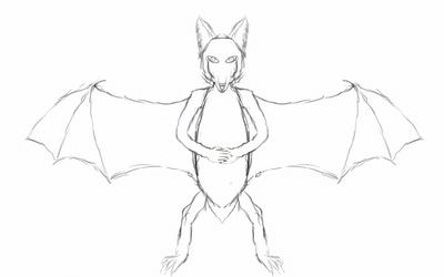 Bat species sketch