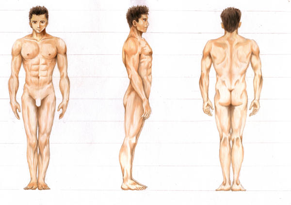 Anatomy of Man by Supijo on DeviantArt
