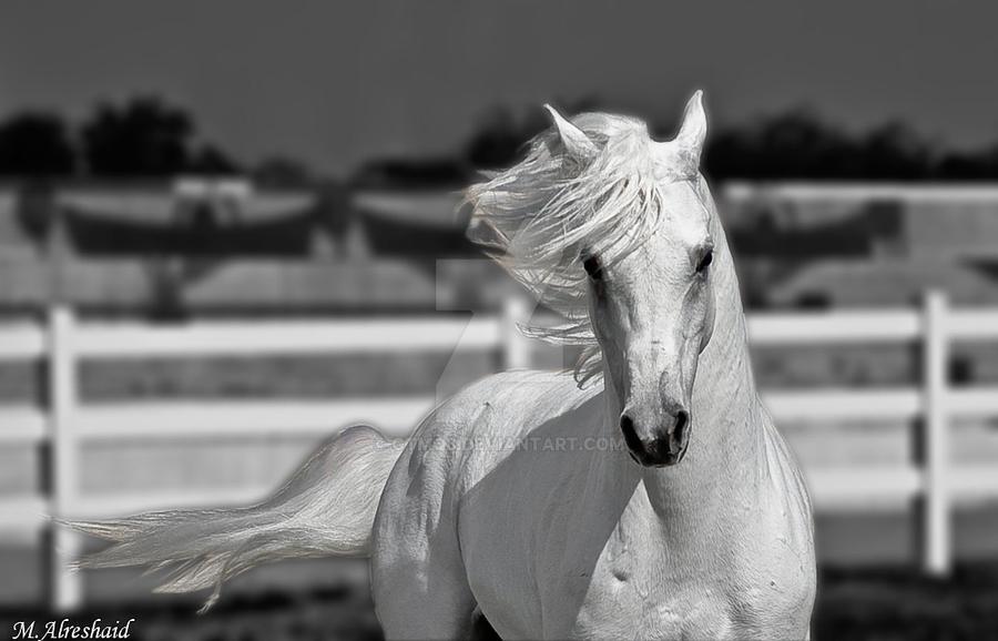 Arabian Beauty by Mishari-Alreshaid