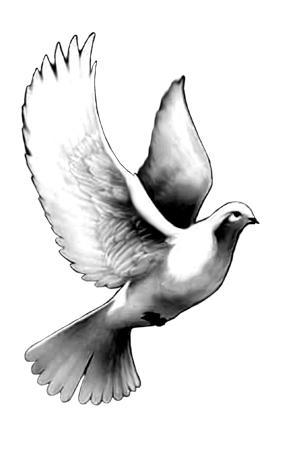 Dove tattoo by noliestotell Dove Bird Drawing Tattoo
