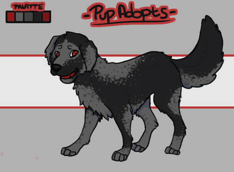 Pup Adopt-Black [Open]