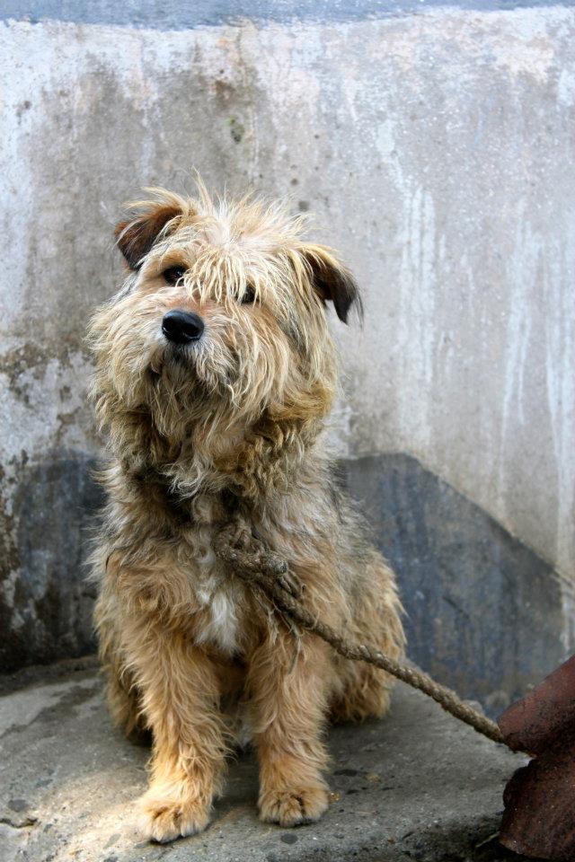 Scruffy Dog Breeds 63877 | MOVDATA