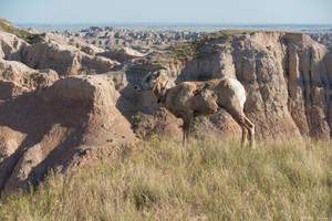 Badlands South Dakota by Arthur-Ramsey