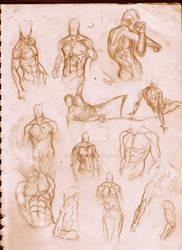 Torso Studies