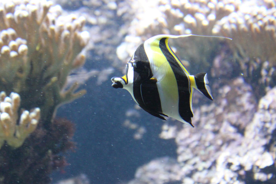 Real black and white fish for Pictures of white fish