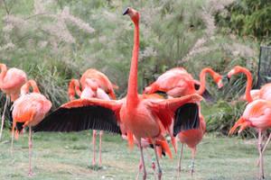 Flamingo 5 by CitronVertStock