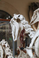 Horse skull 3 by CitronVertStock
