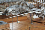 Narwhal tusk 2 by CitronVertStock