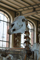 Horse skull 4 by CitronVertStock
