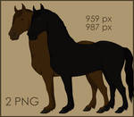 All coats of Friesian by CitronVertStock