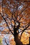 The Autumn Spread