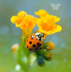 I Love Flowers by FreeSpiritFotography