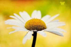 Summer Queen by FreeSpiritFotography