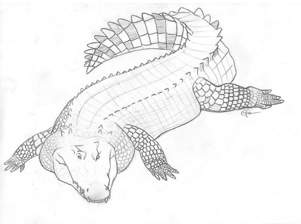 Line Drawing Of Water Animals : Saltwater crocodile by elithedinoguy on deviantart