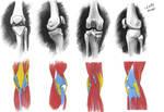 Anatomy 8