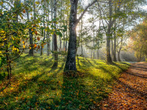 Autumn sun by Alexey-Kljatov