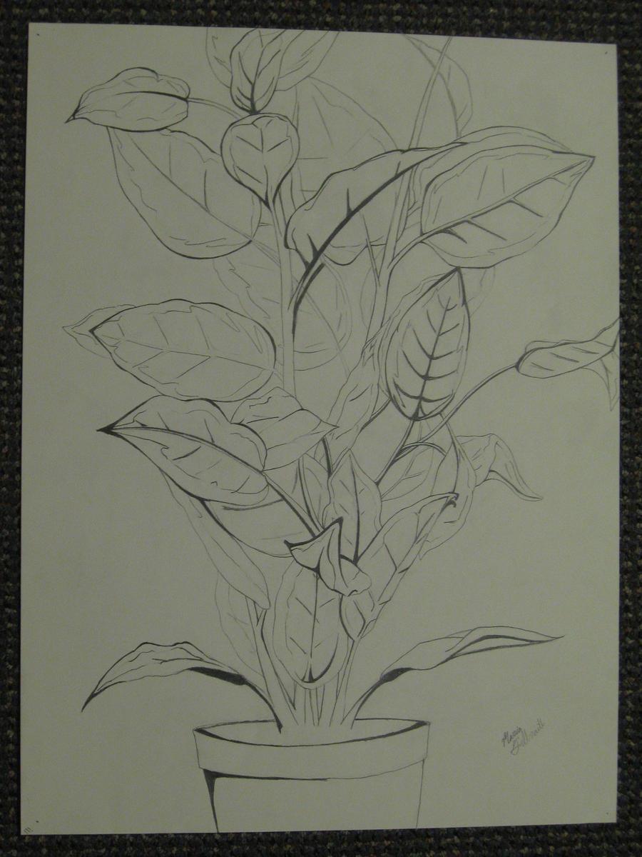 Contour Line Drawing Of A Flower : Plant contour lines by miasaurusrex on deviantart