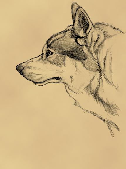 Princess Miri; The Elvish Archer Wolf_by_Tattered_Artemisia