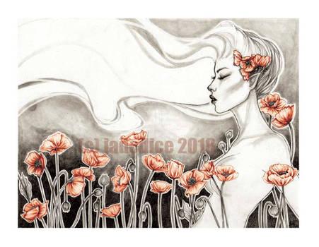 -- poppies --