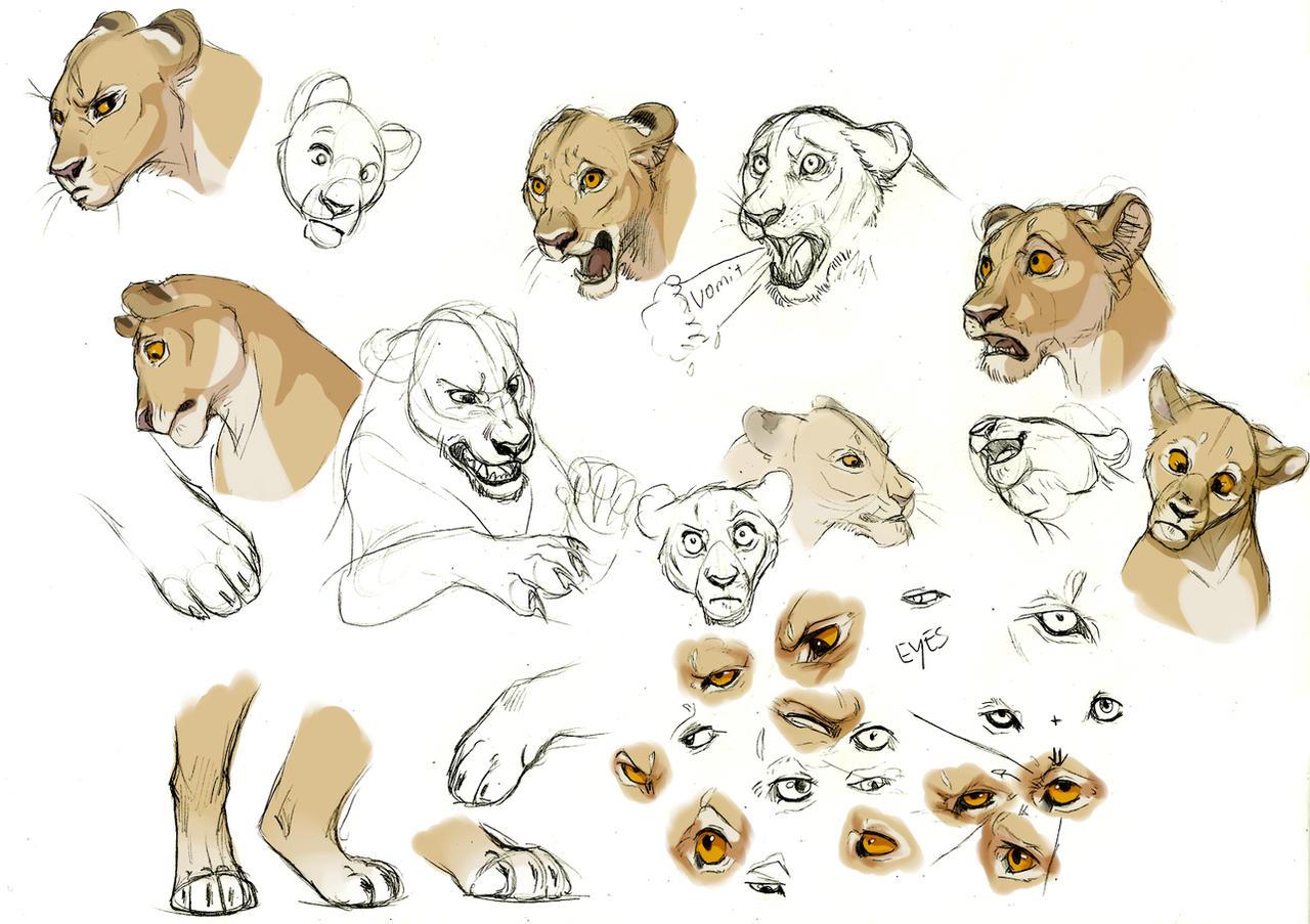 Lioness Expression Studies By Esava On DeviantArt