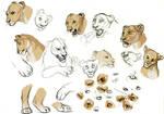 Lioness expression studies